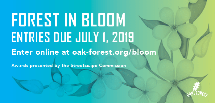 Forest In Bloom 2019